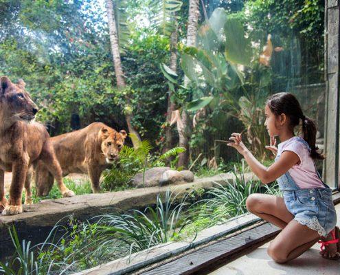 Bali-Zoo-Cover
