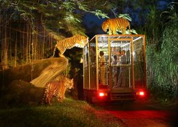 Bali-Safari---Night-Safari-Feature-Image
